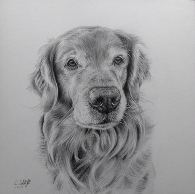 Golden Retriever Bentlay, 30x30cm