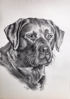 Labrador Fame, A3,  Vorlagenfoto Trudy Mendelin