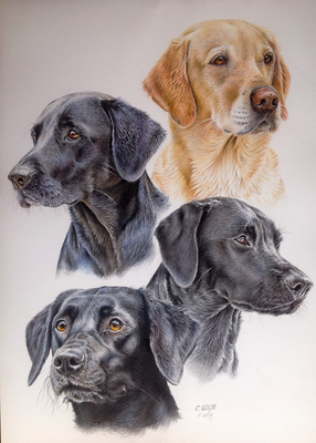 Labrador Retriever Wasco, Ulani, Sally und Velvet, A2, Fotos Ruth Benger und Luana Tonoli
