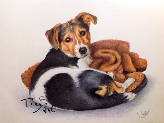 Jack Russell Terrier Maylo, A3