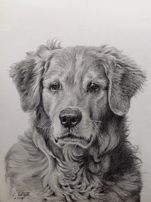 Golden Retriever Ben, 23x30,5cm