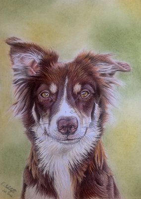 Border Collie NaCha, A4