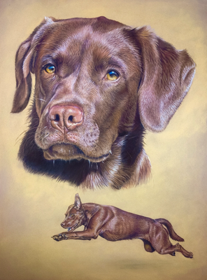 Labrador Kuba, 30x42cm, Vorlagenfoto Trudy Mendelin