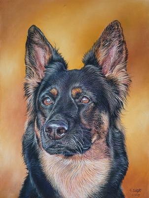 Chodenländerhund Emba, 30x40cm
