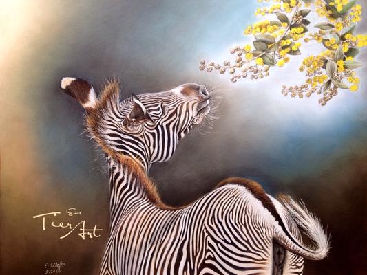 """""""Streifen und Linien"""", Grevy Zebra, 40x50cm, Foto von mir mit freundlicher Genehmigung des Zoo Mulhouse"""