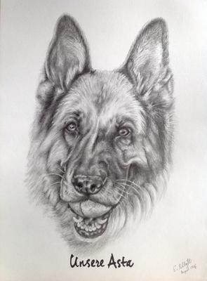 Deutscher Schäferhund Asta, A3