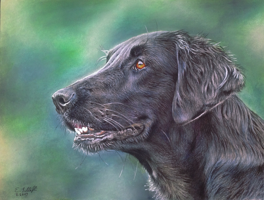 Flat Coated Retriever Chaya, 23x30.5cm, Foto Beatrice Müller