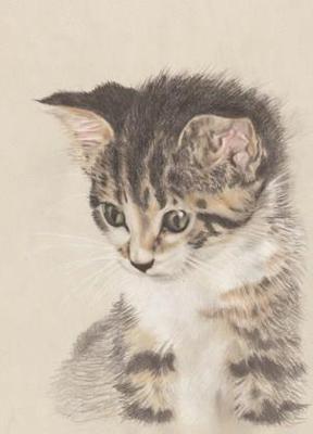 Kätzchen Joshi, A4