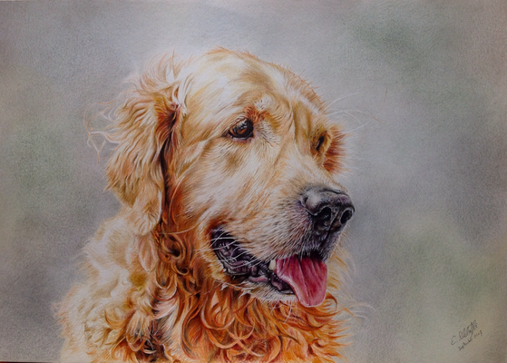 Golden Retriever Flint, A3