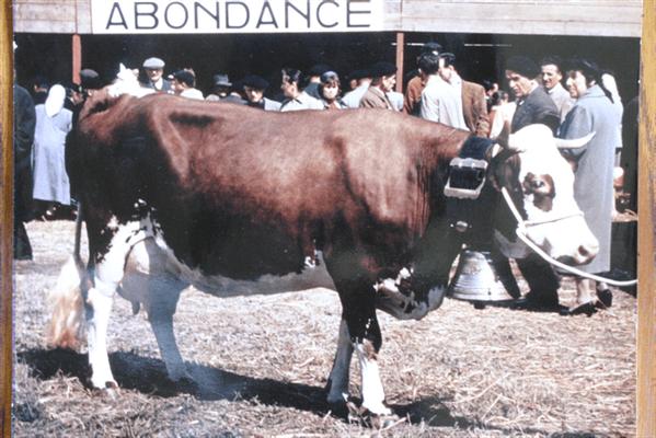 Girardine en 1948 - née en 1948, a produit 8 436 kg de 1957 - Propriétaire : Joseph Cartier à Présilly (74)