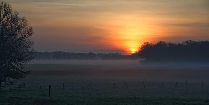 Nebelschwaden bei Sonnenaufgang, Niederrhein