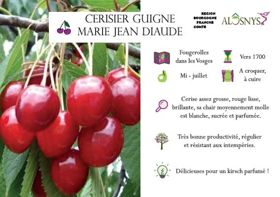 Cerisier Guigne Marie Jean Diaude