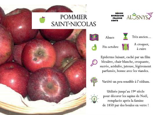 Pommier Saint Nicolas