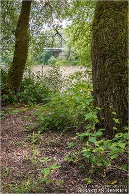 Bugac-Stendelwurz im Lebensraum