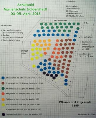 Die weiträumige Bepflanzung erlaubt einen Teppich an Wiesenschaumkraut im Schulwald Einbeck Foto: Stiftung Zukunft Wald