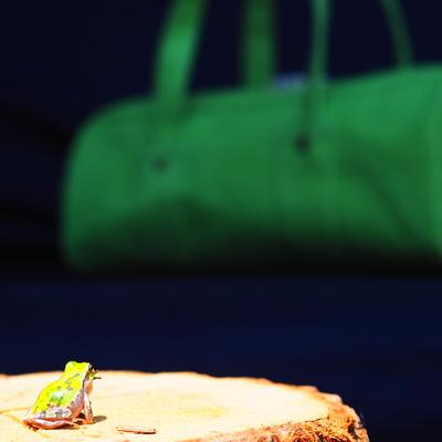 カエルカラーのバッグ
