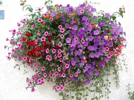 Balkon Blumen