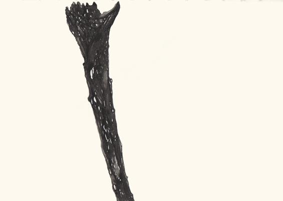 Bone, 20 x 30 cm, Tusche auf Papier, Susanne Renner, 2015