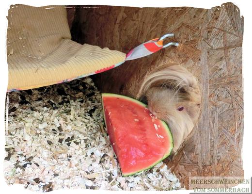 Ummo testet vorsichtig Melone