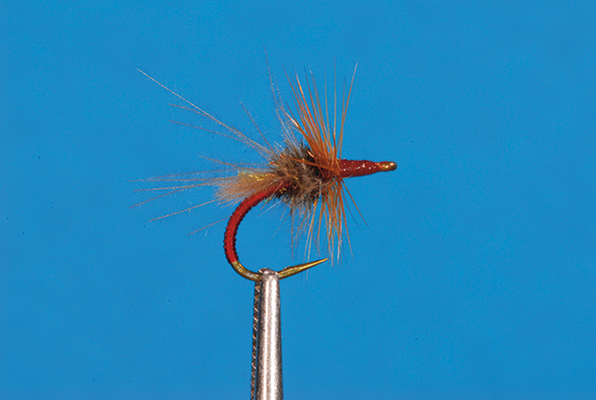 Red Grayling Attractor