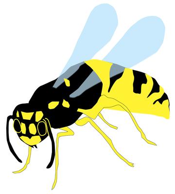 Eine Wespe und auf der folgenden Seite die Elster wurden für den Kinderreiseführer der Stadt Thale gezeichnet.