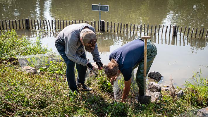Paul en Loek plaatsen de laatste rietplanten. 100 Stuks lijkt veel, maar er zullen nog vele moeten volgen voor het project is afgerond.