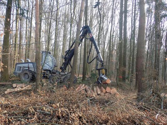 Wir beobachten den Vollernter im Wald