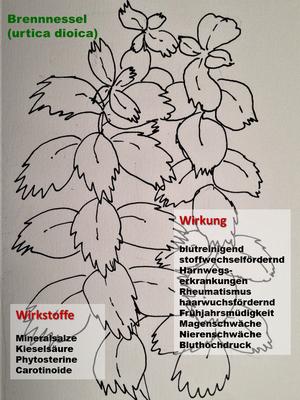 Textplantage_Monatsblatt Juni 2017_Brennnesseln