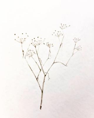 Soil On Paper, 2018