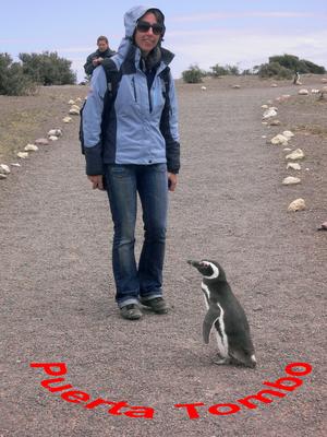 "Bild: Pinguin sagt ""Guten Tag"""