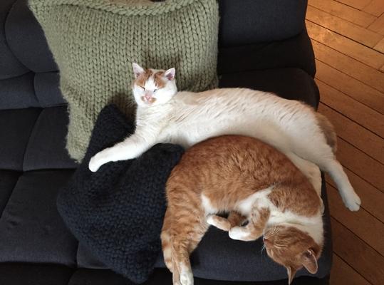Enzo and Pepita