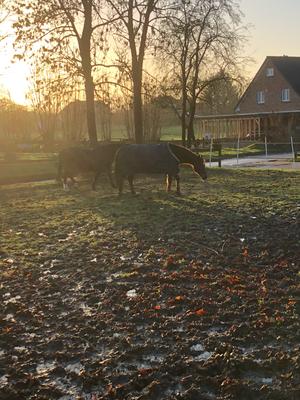 Unser Winterpaddock für unsere Schulponys und Rentner (Foto: Susannah Bock)