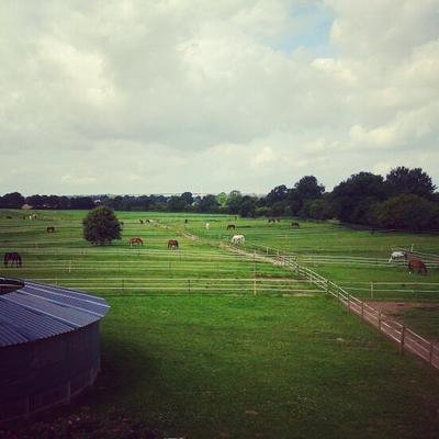 Der Blick über die Weiden und die Galoppbahn (Foto: Nina Knoop)