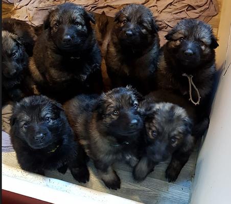 Petites Violette, Rose, Orange, Grise, Jaune, Verte et Marron