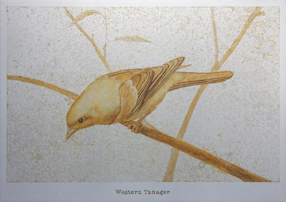 ニシフウキンチョウ / Western Tanager / H182×W257mm / 07.2017