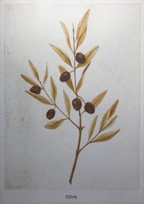 橄欖 / Olive / H182×W257mm / 10.2017