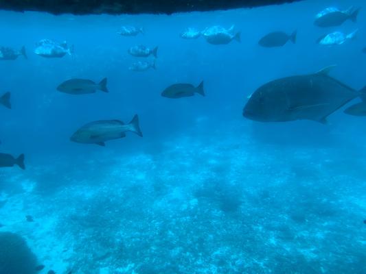 潜水艇からの眺め