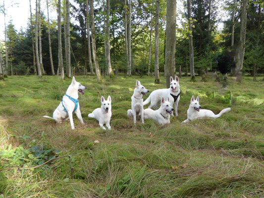 von links nach rechts: Aivy Isjaki, Gracie Elayne, Ava Snow, Akela, Arco, Ahyoka Skadi