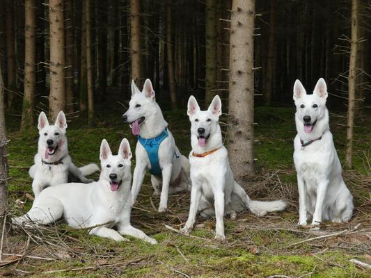 von links nach rechts: Arco, Ahyoka Skadi (liegend), Akela, Aivy Isjaki, Gracie Elayne