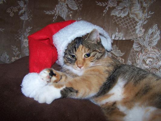 Unsere Katze Milly