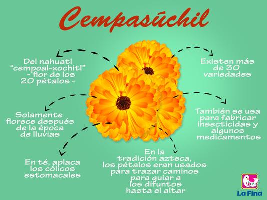 fleur cempasuchil du Mexique