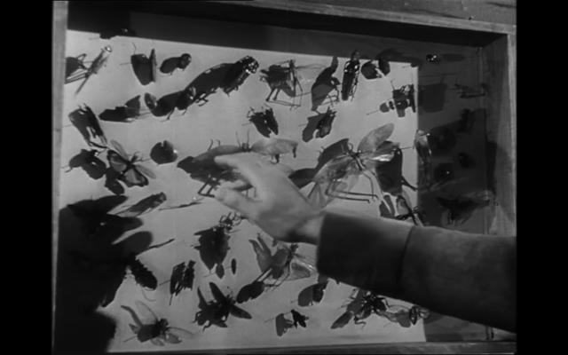 1953_bunuel abismos de pasion