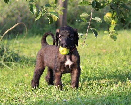 Yamei hat einen Apfel gefunden
