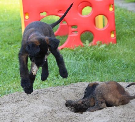 Der Sandhauf ist sehr beliebt