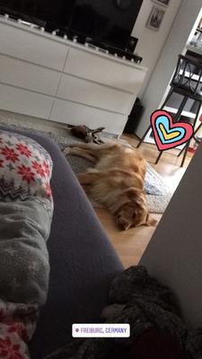 Bellis nach dem Spaziergang in meiner Wohnung (Montag, 19. Mörz 2018)