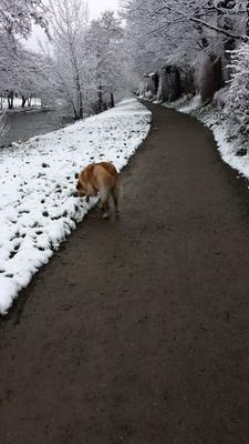 Erster Spaziergang in Freiburg an der Dreisam (Sonntag, 18. März 2018) - direkt nach diesem Schnappschuss hat der Akku meines Handys leider versagt, daher keine weiteren Bilder aus dem Schnee