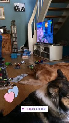 Bellis und Luna im Wohnzimmer inzwischen von Kinderspielzeug (Mittwoch, 21. März 2018)