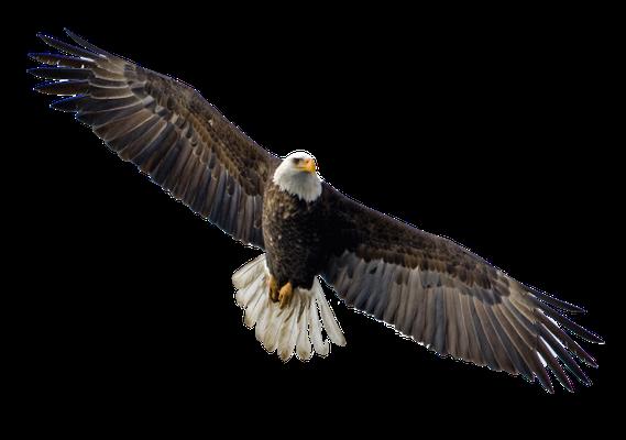 Le quatrième être vivant ressemblant à un aigle en plein vol représente la perspicacité et à la sagesse de Dieu qui perçoit chaque détail avec précision et qui scrute en continu les cœurs et les reins.