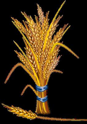 Les fidèles chrétiens composant la grande foule qui se trouve devant le trône de Dieu et de l'Agneau sont moissonnés comme le bon blé. Le temps de la fin et le temps de la moisson. Les moissonneurs sont les anges.