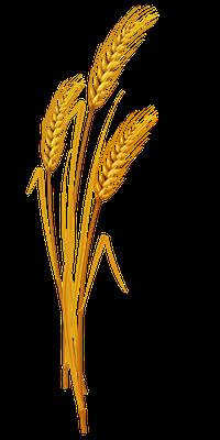 Au temps de la fin aura lieu la moisson de la terre. Le bon blé symbolise les fidèles chrétiens qui bénéficieront des promesses divines, la mauvaise herbe sera détruite définitivement.